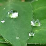gouttes et feuilles