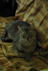 la sagesse incarnée : le chat!