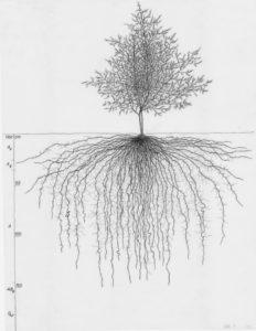 arbre et racines